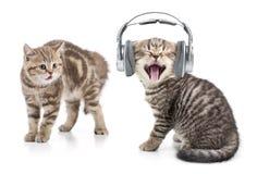 O gato engraçado na música de escuta dos fones de ouvido e um outro gato são chocados por este Fotos de Stock