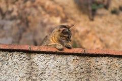 O gato engraçado observou o ambiente de uma parede de pedra Imagens de Stock Royalty Free