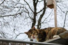 O gato engraçado imagens de stock royalty free