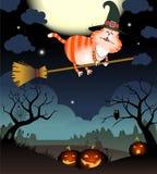 O gato engraçado voa em um cabo de vassoura Imagem de Stock Royalty Free