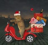 O gato entrega presentes do Natal na noite fotografia de stock