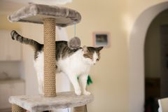 O gato escalou na torre para gatos foto de stock