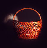 O gato escondeu em uma cesta que cola fora de uma cauda Fotografia de Stock Royalty Free