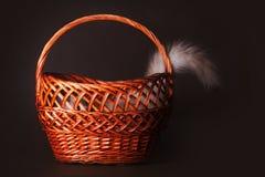 O gato escondeu em uma cesta que cola fora de uma cauda Fotos de Stock