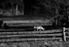 O gato está andando em uma cerca de madeira em uma vila Imagem de Stock Royalty Free