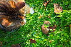 O gato está caçando Fotografia de Stock