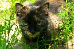 O gato está caçando na grama verde foto de stock royalty free