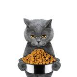 O gato está com fome e mantém o alimento Fotografia de Stock Royalty Free