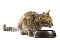 O gato está alimentando de uma bacia imagem de stock