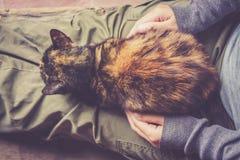 O gato está descansando Fotografia de Stock