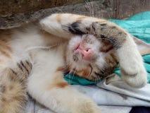 O gato está dormindo Imagens de Stock Royalty Free
