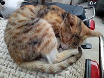 O gato está dormindo Imagem de Stock Royalty Free