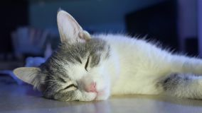 O gato está dormindo na tabela na noite o gato dentro pet está descansando filme