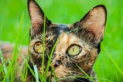O gato está encontrando-se fotografia de stock