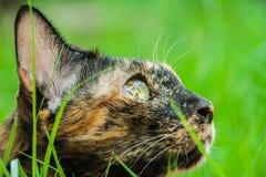 O gato está encontrando-se imagens de stock royalty free