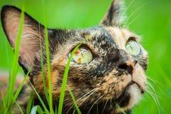 O gato está encontrando-se fotografia de stock royalty free