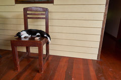 O gato está encontrando-se em uma cadeira Imagens de Stock