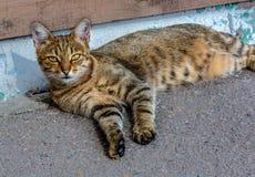 O gato está encontrando-se na rua no dia de Sun imagem de stock
