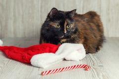 O gato está encontrando-se perto do chapéu e dos doces do Natal, olhando afastado e furado fotografia de stock royalty free