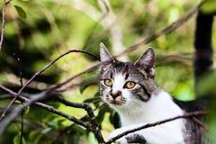 o gato está pendurando na árvore Foto de Stock