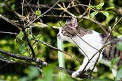 o gato está pendurando na árvore Fotos de Stock Royalty Free