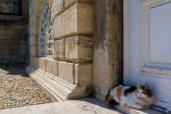O gato está perto da porta velha foto de stock