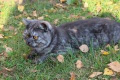 O gato está preparando-se para uma caça em uma manhã ensolarada imagens de stock