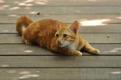 O gato está querendo saber Imagem de Stock Royalty Free