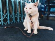 O gato está sentando-se Fotos de Stock Royalty Free