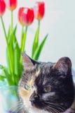 O gato está sentando-se ao lado das flores Imagem de Stock Royalty Free