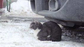 O gato está sentando-se na neve filme