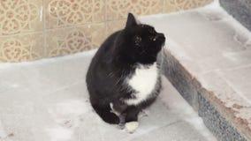 O gato está sentando-se na neve video estoque