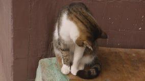 O gato está sentando-se no banco vídeos de arquivo