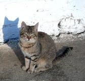 O gato está tomando sol no sol Fotografia de Stock