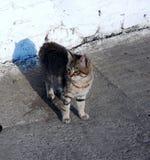 O gato está tomando sol no sol Foto de Stock Royalty Free