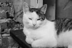 O gato está tomando uma sesta Imagens de Stock