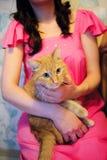 O gato está colocando na mulher gravida Imagem de Stock Royalty Free