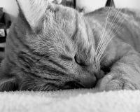 O gato est? dormindo fotos de stock