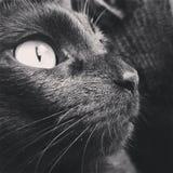 O gato est? olhando fotos de stock