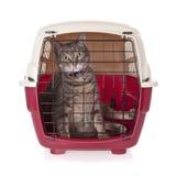 O gato fechou o portador interno do animal de estimação Foto de Stock