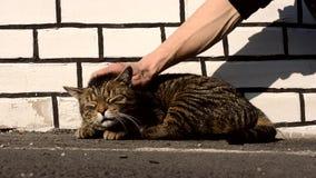 O gato feliz sente o prazer ao ser homem afagado filme