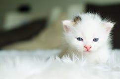 O gato, foco seletivo Imagens de Stock Royalty Free