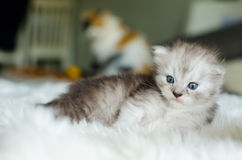 O gato, foco seletivo Foto de Stock Royalty Free