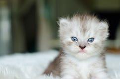 O gato, foco seletivo Imagens de Stock