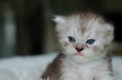 O gato, foco seletivo Imagem de Stock