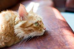 O gato foi absorvido em algo. Fotos de Stock