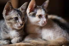 O gato, gatos pequenos de A, junta gatos imagens de stock