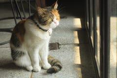 O gato gordo está sentando a vista fora da porta de vidro imagens de stock