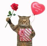 O gato guarda uma caixa de presente vermelha e uma rosa foto de stock royalty free