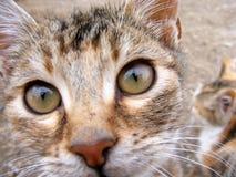 O gato interessante e bonito da rua representa apropriado para anunciar e projeta-o Imagem de Stock Royalty Free